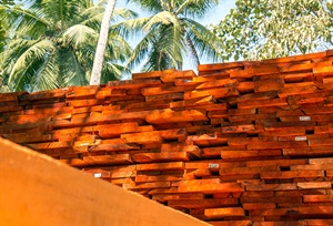Sri Lankan timber yard busy with domestic orders
